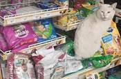 流浪貓:看你態度不錯,還給我買吃的,就選你做我主人吧!!!