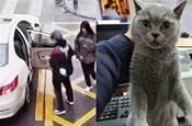 男子為討女友歡心,撬開寵物店大門偷貓,最後女友和他分手,還被員警抓了!!!