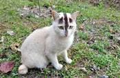 長相這麼奇特的貓,請問是真實存在的嗎?