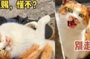 大型流浪貓碰瓷現場!貓:你我本無緣,全靠我碰瓷!