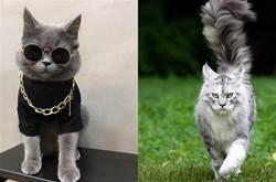 有6種貓咪,對主人「最忠心」,甘願一生跟著主人