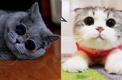勸告:永遠不要養的3種貓VS最適闔家養的3種貓