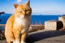 貓咪的5種行為,原來是在向主人「道別」,淚目了