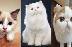 貓咪的性格,大多受5個「因素」影響,尤其第4個
