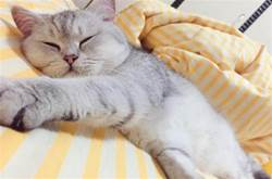 原來貓咪和你一起睡,是想對你說5句話,可愛的喵星人