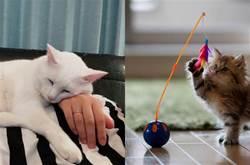 貓咪「最重視」的5件事,一旦滿足,它願為你「賣命」