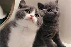 7種貓不是「白眼狼」,一旦養了,餘生心裡只有你